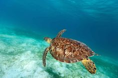Best Places to Snorkel in St. John   Maho Bay