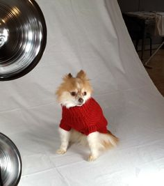 Behind the Scenes: Touch of Europe Dog Clothing Photo Shoot. Doggie sweaters, clothing and accessories coming soon!
