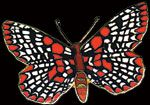 Beautiful, richly colored, hand-crafted enameled Checkerspot butterfly pin by William Spear Designs. Butterfly Pin, Small Art, Enamel, Vitreous Enamel, Enamels, Frosting