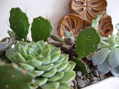danger garden: Succulents have helped keep me sane during the winter months…