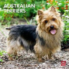 Australian Terriers 2012 Square 12X12 Wall Calendar (Multilingual Edition),$10.81