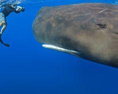 This Whale's eye...