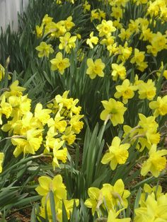 Just 6 months until bulbs bloom again here in the north.  To order Life Is a Garden Party, go to WestBow Press.  To read samples, click on http://lifeisagardenparty.blogspot.com