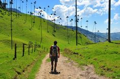 Walking along a path in Colombia's Valle del Cocora Top Country, Travel Videos, South America, Places To Visit, Park, World, Sri Lanka, Passport, Nature