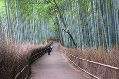 Brushwood fence at the Rakusai Bamboo Park in Kyoto.