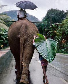 Elephant #serene