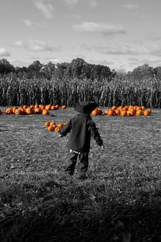 LuLu Weaver...Pumpkin Patch  Beautiful black and white photo with a touch of splash.