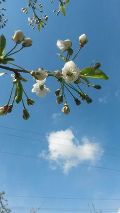 Dandelion, Flowers, Plants, Dandelions, Flora, Plant, Royal Icing Flowers, Flower, Florals