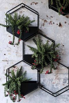 24 Incredible Wall Planter Pots For Devoted Plant Fans 24 Incredible Wall Planter Pots For Devoted Plant Fans Hexagon Metallic Wall Pots Designs ★ Modern and unique wall planter pots made of plastic, ceramic, and metal to decorate your walls with. Succulent Wall Planter, Metal Wall Planters, Rustic Planters, Hanging Planters, Garden Planters, Planter Pots, Outdoor Wall Planters, Hanging Terrarium, Succulent Containers