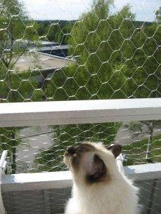 Cat net for balconies