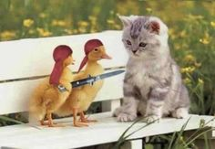 """I'm sure that kitten is wondering the same thing we are, """" How the heck are they holding that?"""""""