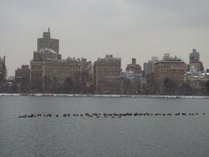 Photo by @luribeirobr #nyc #centralpark #nycwinter