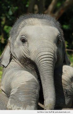 21 Cute baby elephant pictures + videos of other animals Cute Baby Elephant, Cute Baby Animals, Funny Animals, Baby Elephants, Funny Elephant, Wild Animals, Elephant Elephant, Happy Elephant, Small Elephant