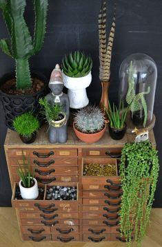 Urban Jungle Bloggers: My Plant Gang