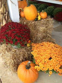 Mums=Fall :) I love fall and I love mums with pumpkins!!!