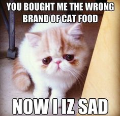 Now that's funny cuz' cats are a pain in the ass when it comes to a different brand of cat food.