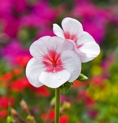 ''Desânimo é flor que deixamos de regar.  Se deixamos nos render pela seca do espírito, morremos em vida.  Anime-se!  Coragem!  Tudo vai dar certo...''   Carla Véras