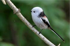 Znalezione obrazy dla zapytania ptaki świata atlas
