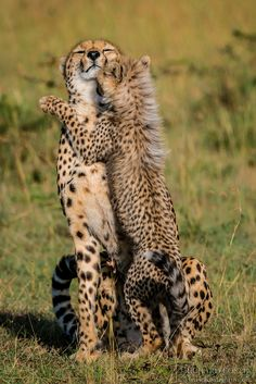 Dance with me... Richard Costin wildlife photography                                                                                                                                                      More