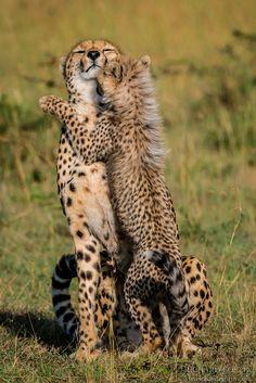 Dance with me... Richard Costin wildlife photography