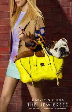 Harvey Nichols' ad campaign starring an English Bulldog... my daughter's kind of purse dog!