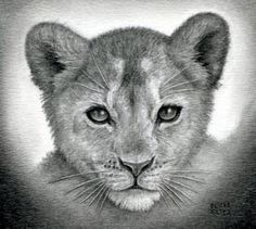 how to draw a lion cub, lion cubs, step by step, safari Lion Cub Tattoo, Cubs Tattoo, Love Drawings, Animal Drawings, Animal Sketches, Realistic Drawings, Lion Drawing, Online Drawing, Lion Art