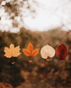 Moon Autumn Magic - virtuallyinsane: by Olga Pogodina Fall Pictures, Fall Photos, Calla, Guy Fawkes, Fall Color Palette, Autumn Cozy, Autumn Feeling, Dark Autumn, Autumn Nature