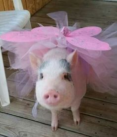 Adorable piggie fairy