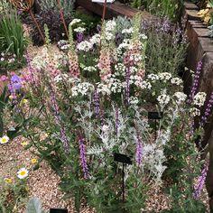 Pretty planting at Chelsea flower show 2018 Chelsea Flower Show 2018, Plant Design, Planting, Fingers, Spaces, Garden, Pretty, Plants, Garten