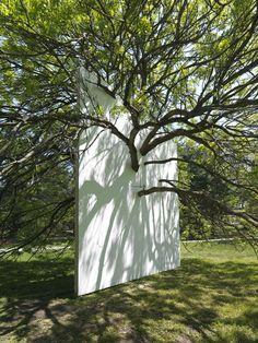 Sembrar arbol y generar muro entre cochera y jardin-alberca