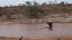 Calf in the river!