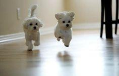 puppy~~