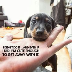 daily dog quotes and pictures