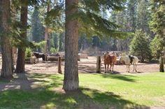 camp-richardson-corral