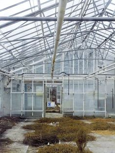 Best    Greenhouses (August 2017) Buyers Guide & Reviews