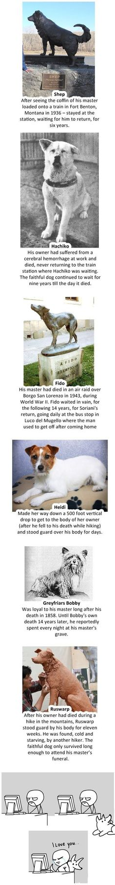 Why dogs are awesome (I shed a tear reading it!)