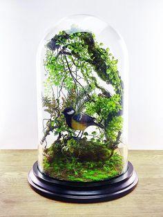 Wald-Terrarium von künstlichen Pflanzen Kabinett der Neugier