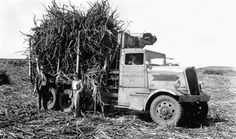 Kenworth sugar cane hauler on the island of Oahu in Hawaii in 1936