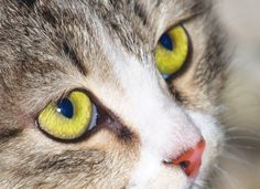 Cat's Eyes (Stock Photo By stoper) [ID: 412740] - stock.xchng