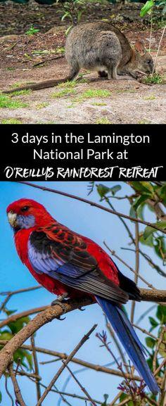 O'Reillys Rainforest Retreat in the Lamington National Park, Australia