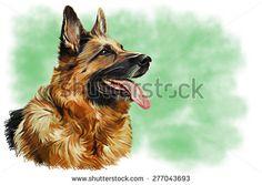 German Shepherd Dog Stock Photos, Images, & Pictures | Shutterstock