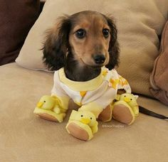 He is Ready for Bed, now; he has his Duckie Booties on.