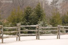 Split rail fence with evergreens in the background