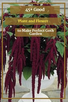 45+ Good Plant and Flower to Make Perfect Goth Garden #flower #flowergarden Gothic Garden, Ornamental Mouldings, Meteor Garden 2018, Cool Plants, Compost, Garden Landscaping, Landscape, Flowers, How To Make