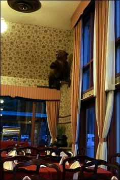 oh my god why did they put that bear up there ?? no wonder why people weren't coming back.   glacier park lodge bc - Google Search