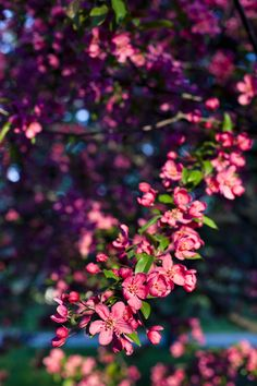 Central Park in the Spring~ | Ann Street Studio #photography