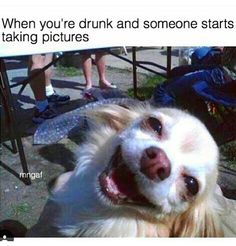 Doggo Memes Are Always The Best! - World's largest collection of cat memes and other animals Funny Drunk Memes, Funny Drinking Memes, Drunk Humor, Really Funny Memes, Funny Relatable Memes, Drunk Quotes, Funniest Memes, Dog Quotes, Funny Animal Jokes