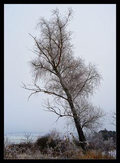 Winter tree V. by vlastanav11 #nature #mothernature #travel #traveling #vacation #visiting #trip #holiday #tourism #tourist #photooftheday #amazing #picoftheday
