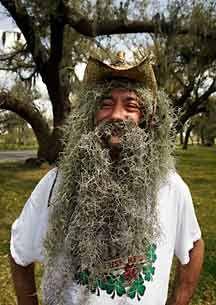 spanish moss beard google search wiley and the hairy man