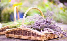 lavender flowers basket